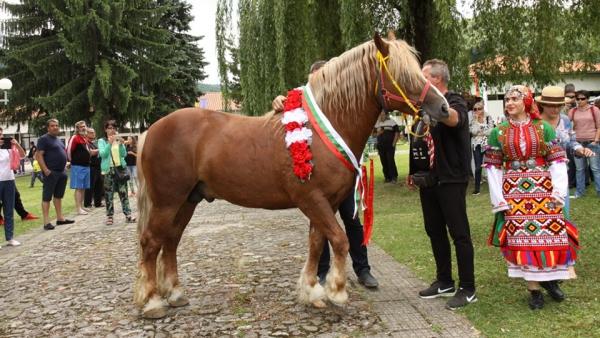 Български тежковозен кон
