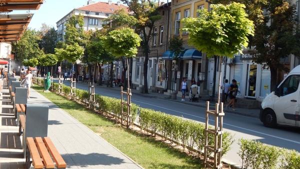"""На мястото на всяко отстранено дърво по ул. """"Стефан Караджа"""" ще бъдат засадени по 2 нови"""